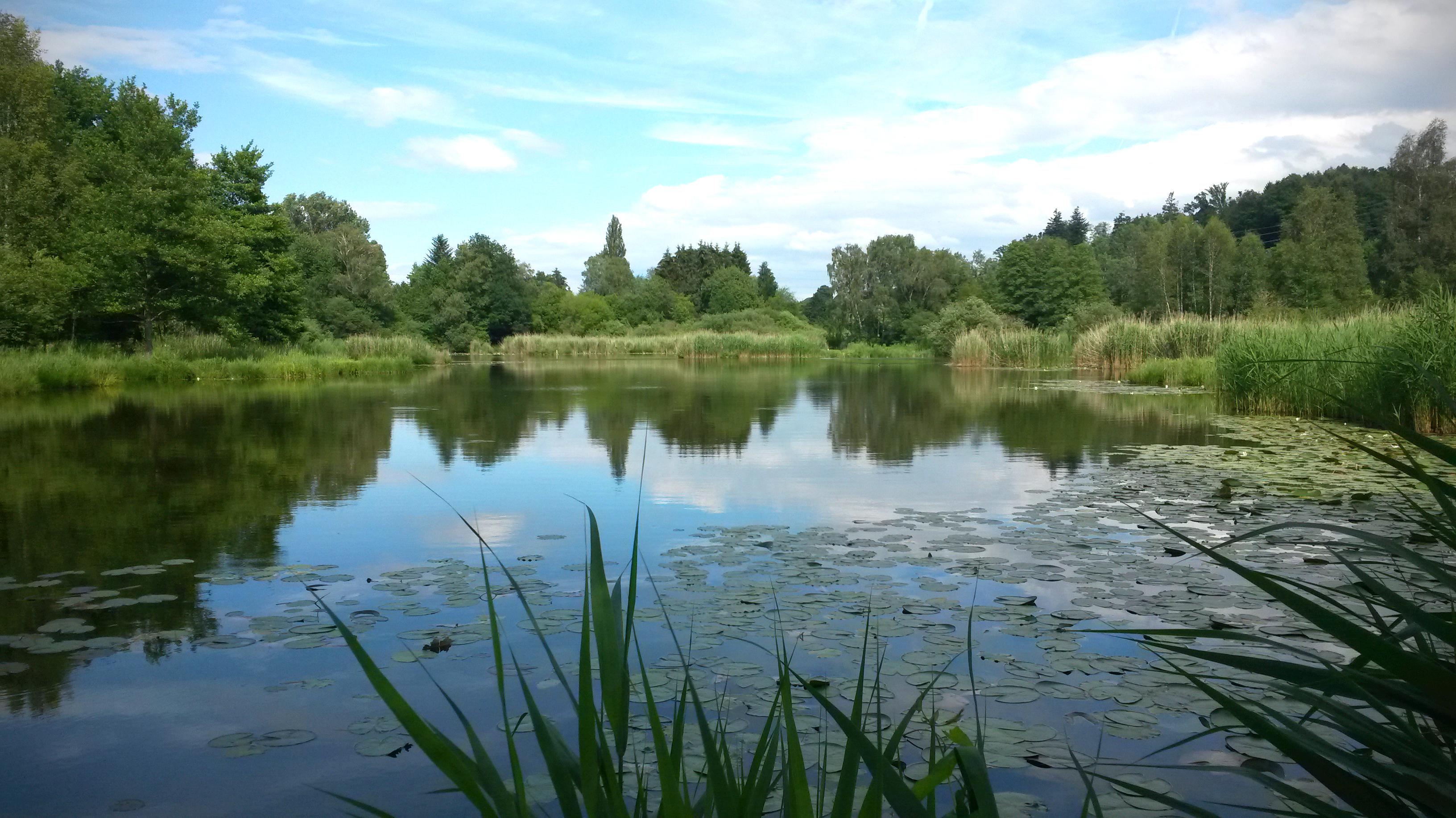 Photo-Essay: Naturschutzgebiet Märwiler Ried
