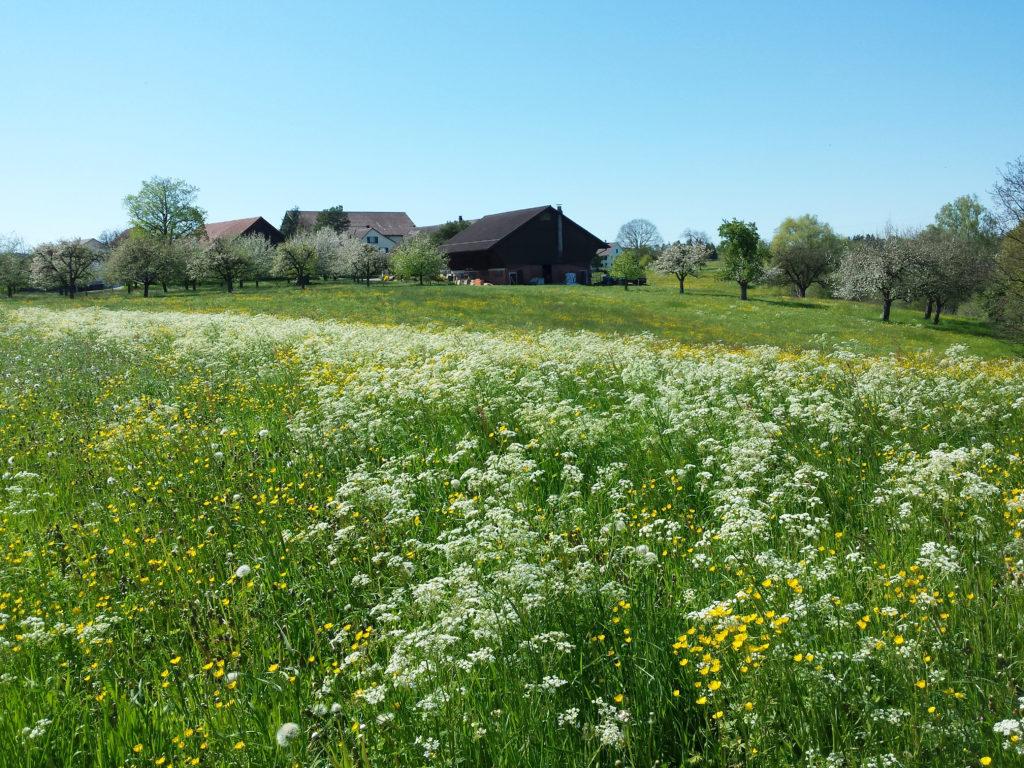 Umgebung, Wiese und Bauernhof am Märwiler Riet (Thurgau)