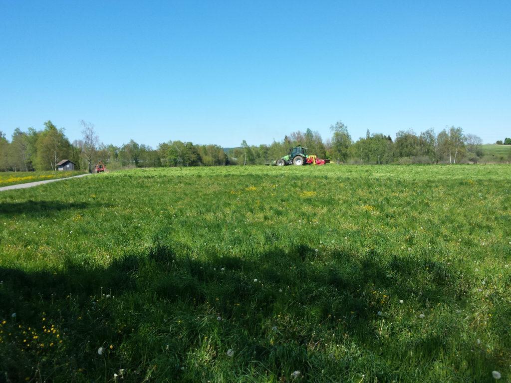 Umgebung, Feld am Märwiler Riet (Thurgau)