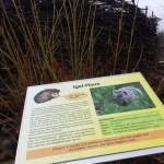 Das Igelhaus. Ein Holzhaufen für den Braunbrustigel, Informationstafel