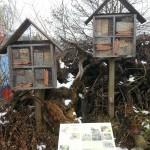 Die Hälfte der 580 Wildbienenarten in der Schweiz sind bedroht
