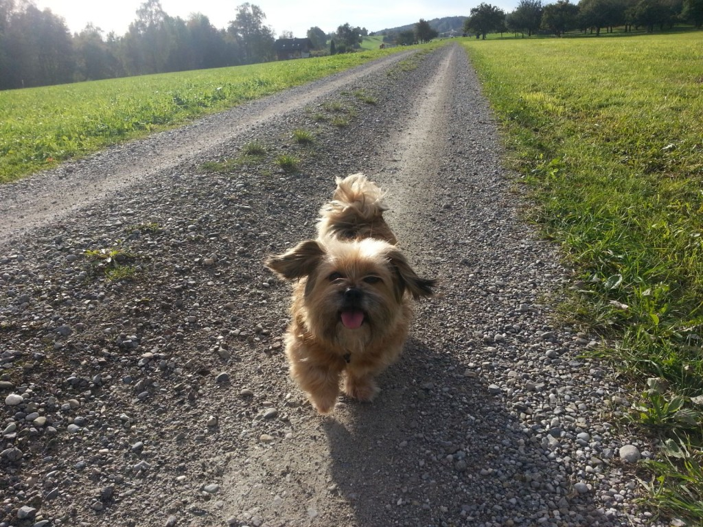 Hund Lisa auf dem Feldweg