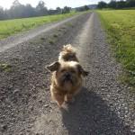 Hund Lisa auf dem Feldweg (Rundgang Märwiler Riet)