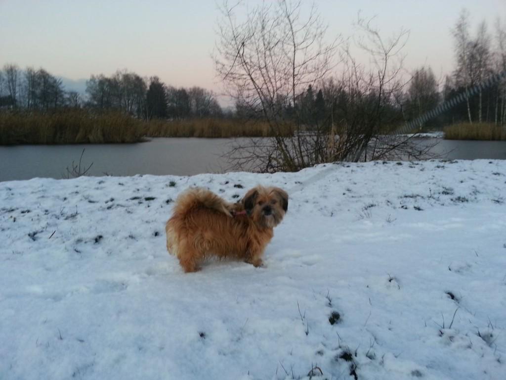 Naturschutzgebiet, Hunde an die Leine