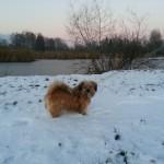 Naturschutzgebiet, Hunde an die Leine nehmen