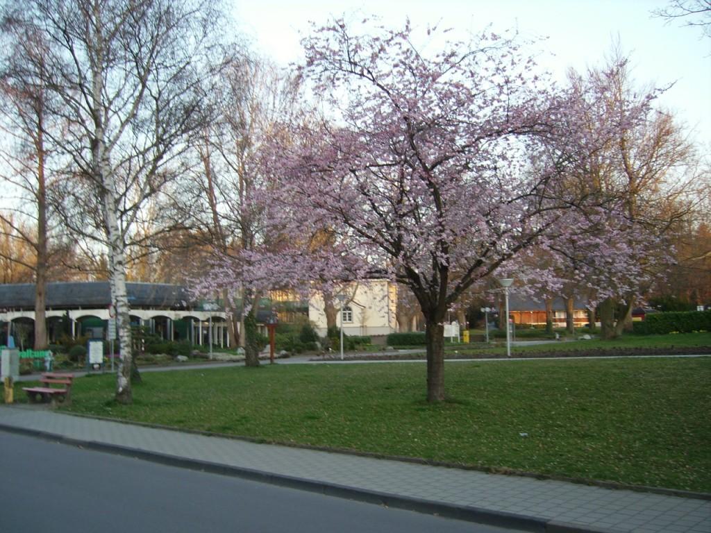 Eden Hotel am Park - Umgebung bei der Therme