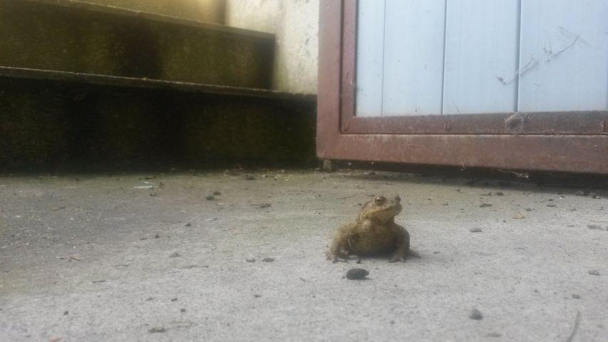 Auch dem Frosch geht es gut, gefunden in unserem Untergeschoss :)