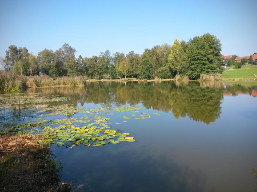 Ried zwischen Friltschen, Märwil und Buch b.M. im Thurgau (Naturschutzgebiet)