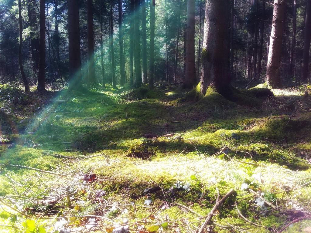 Wald zwischen Märwil und Mettlen, Thurgau am 17.03.2016