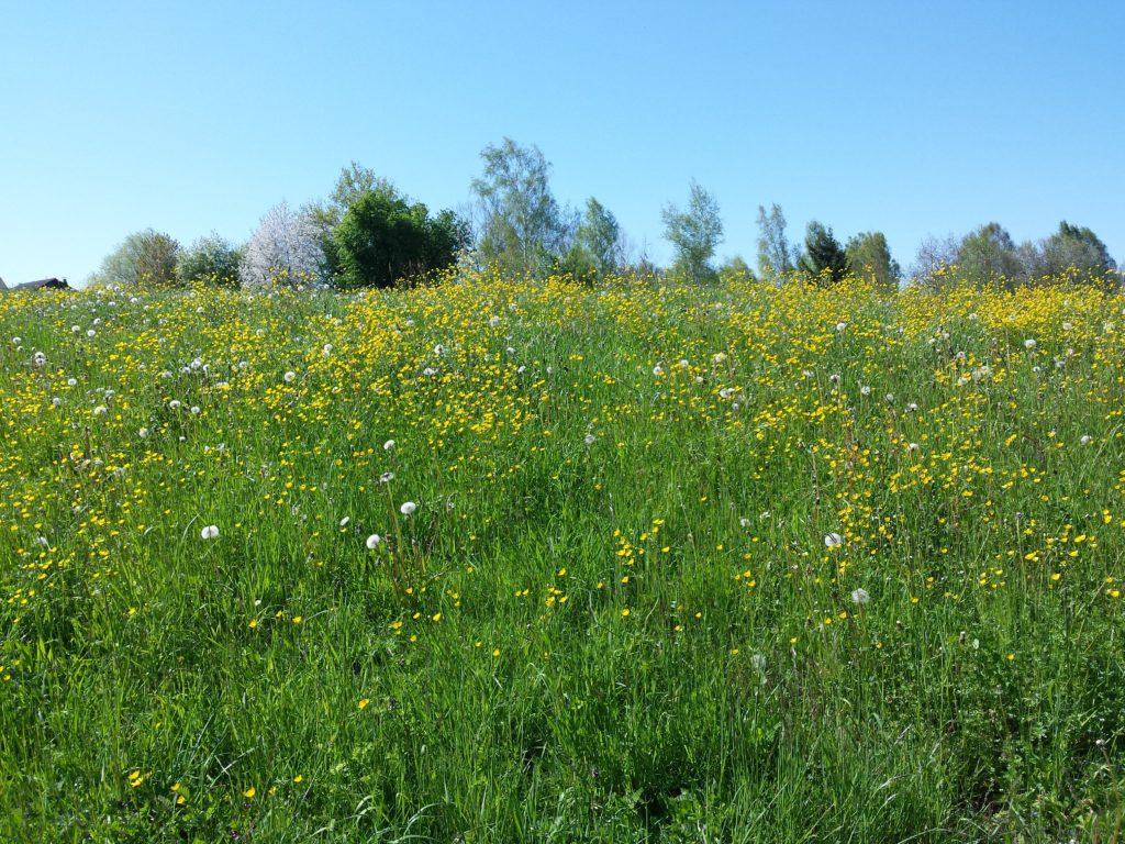 Umgebung, Wiese am Märwiler Riet (Thurgau)
