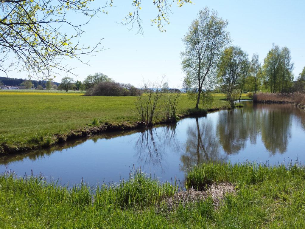 Seitenweiher am Märwiler Riet (Thurgau)