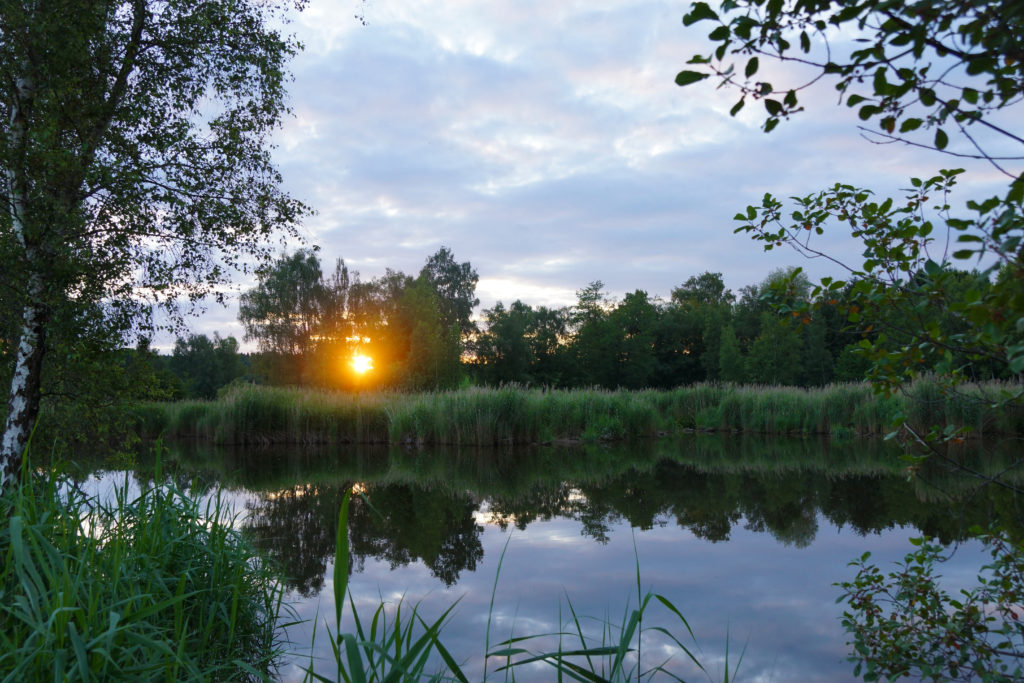 Märwiler Riet (Märwil, Thurgau): Die Sonne leuchtet noch ein paar letzte Minuten